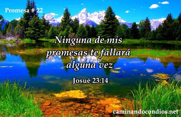 promesa-22-dev