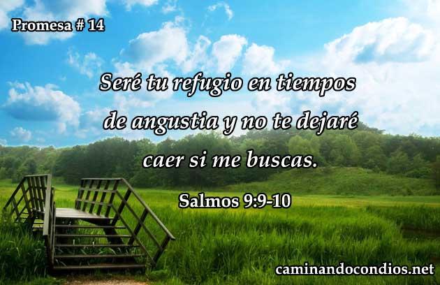 promesa14-busqueda