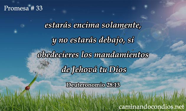 promesa-33-dev