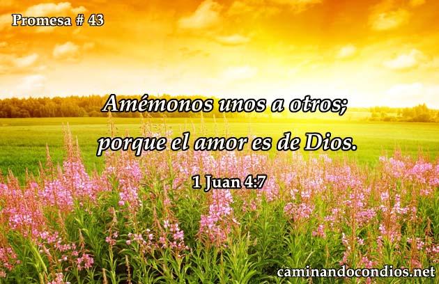 promesa-43-des