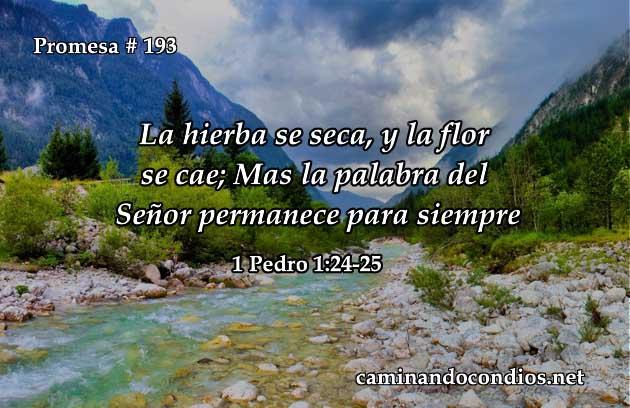 1 Pedro 1:24-25