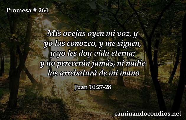 Juan 10:27-28