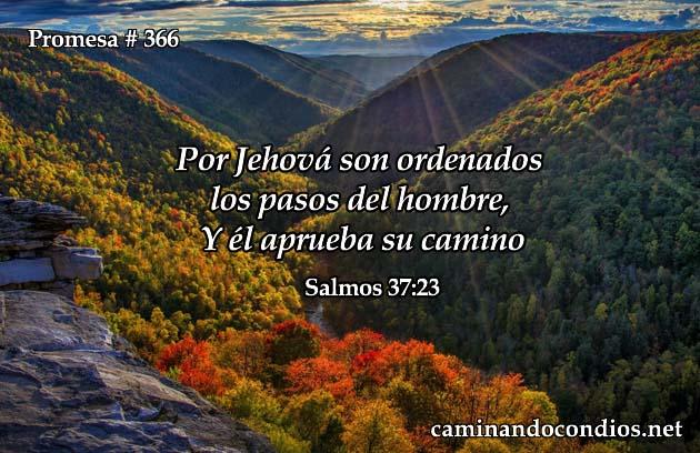 promesa-366