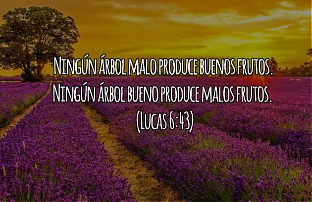 Lucas 6:43