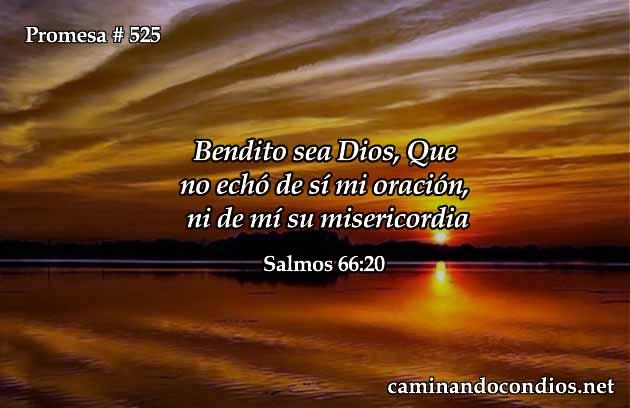 La misericordia de Dios no nos abandona