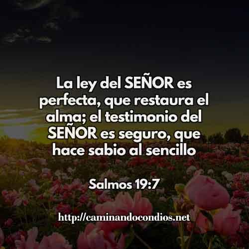 SALMOS-19-77