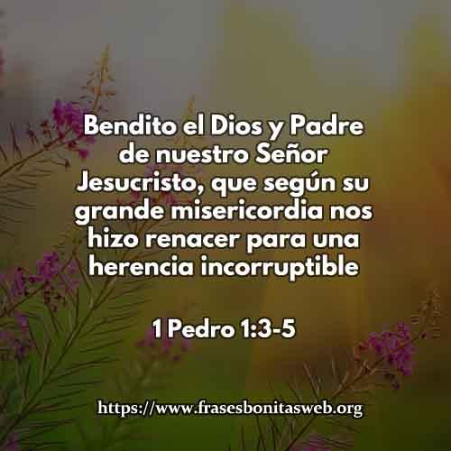 1-Pedro-1-3-5