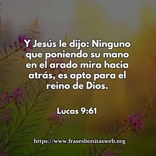 lucas9-61-dev