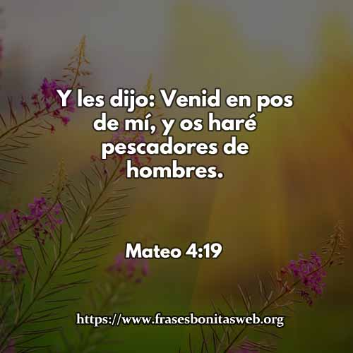 mateo419-dev