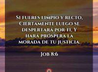 job-8-9-dev