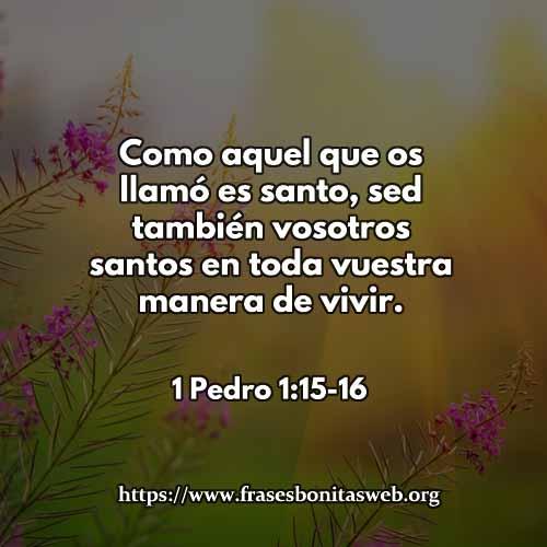 1-PEDRO11516