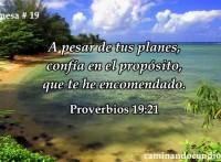 promesa-19-de