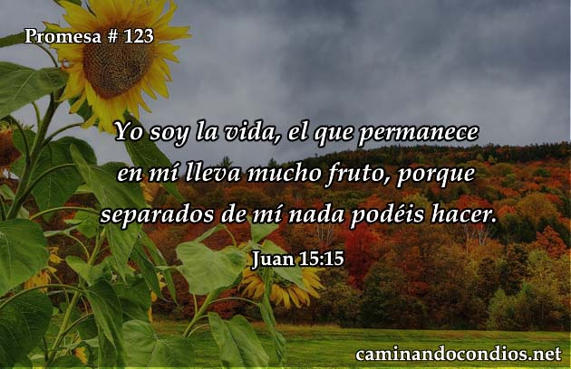 juan 15:15