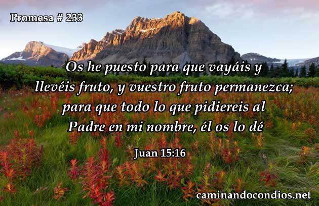 Juan 15:16
